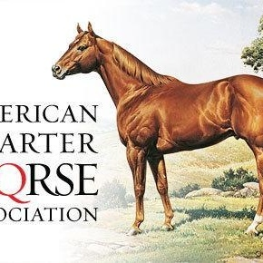 Classic American Quarter Horse Wallpapers By American Quarter