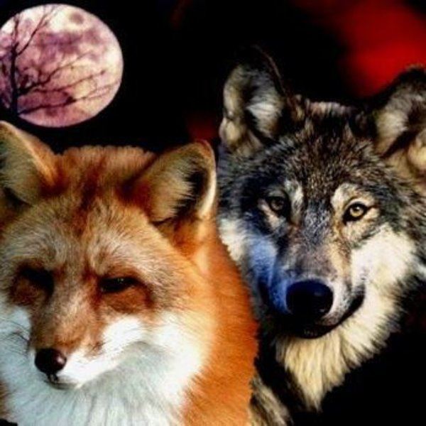 The Fox And Wolf Friendship Listen And Stream Free Music